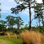 Disney Wilderness Preserve.jpg
