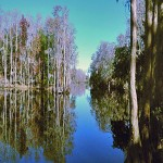 Shingle Creek Ruba.jpg